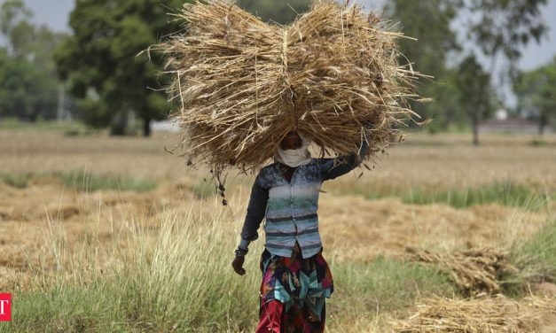Procurement target for wheat likely to be met; Punjab and Haryana leading the tally
